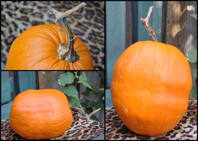 pumpkin collage 2015