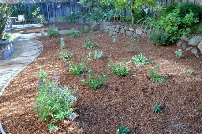native planting