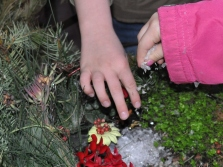 Tiny hands visit the fairy garden