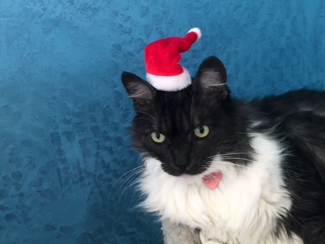 lindy in santa hat