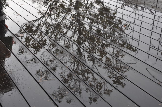 tree reflecting in rain on deck