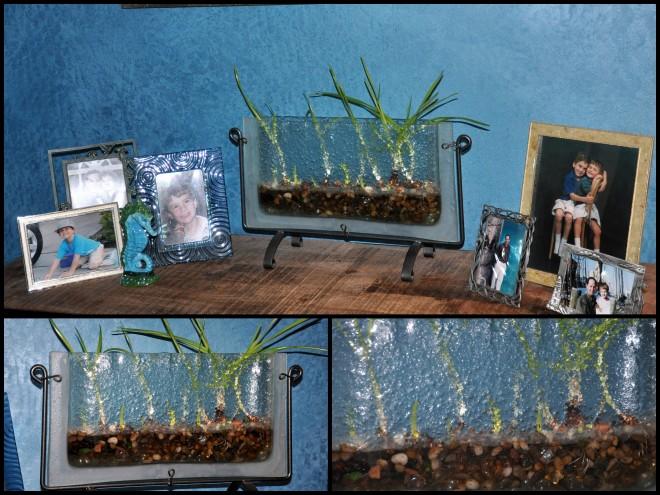 indoor bulbs collage
