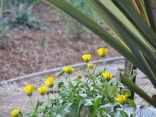 Yellow flowers from seed mix