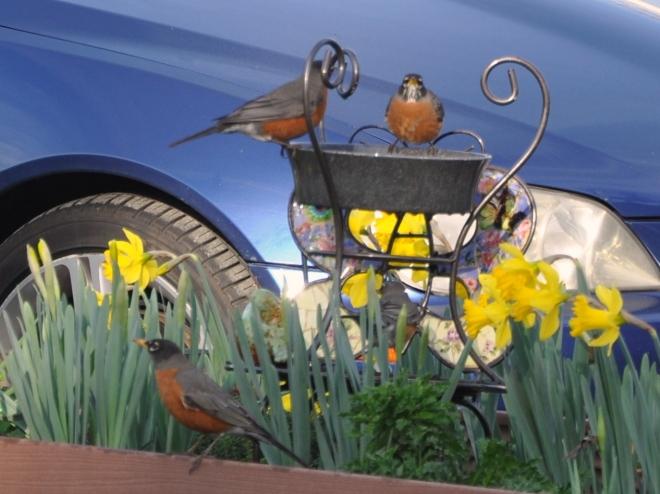 three red robins