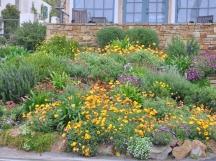 Garden along the coast