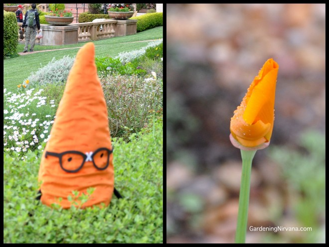 gardenerd and poppy