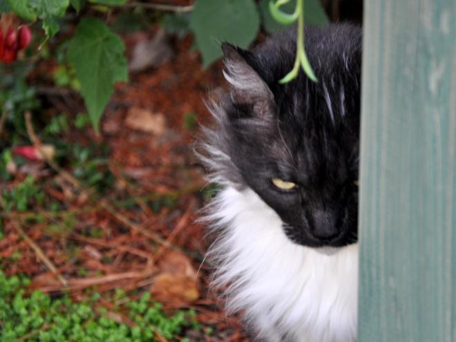 lindy near garden bench