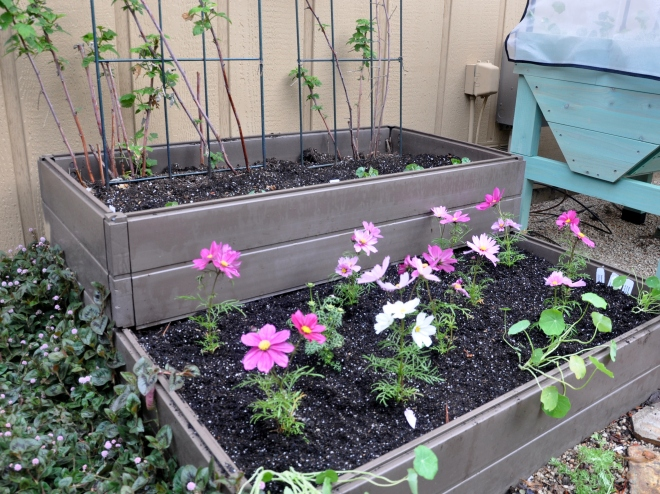 planter box one