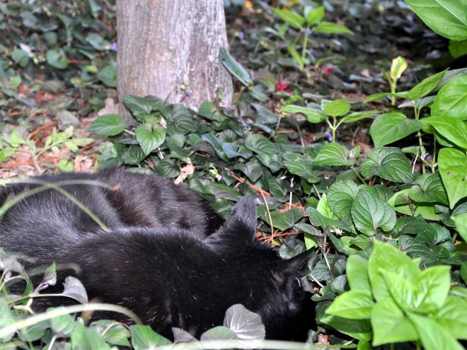 slinky under the maple tree