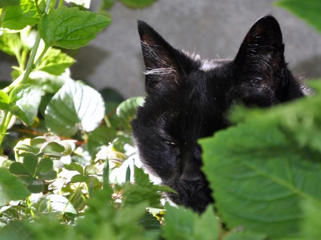 slinky under the tree eyes closed