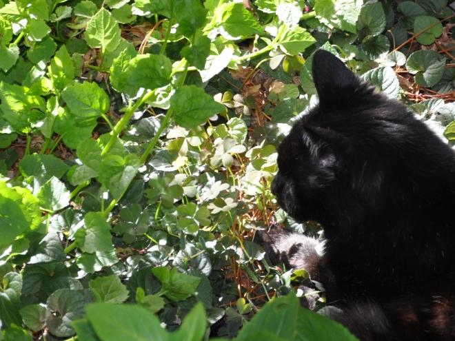 slinky under the tree