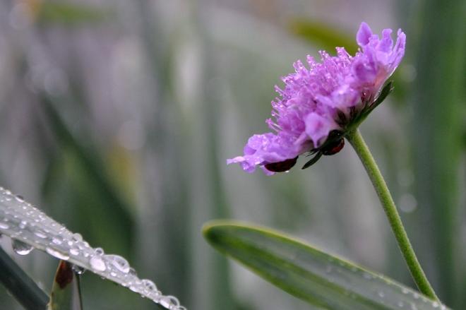 curb garden pink flower