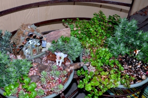 fairy garden jungle