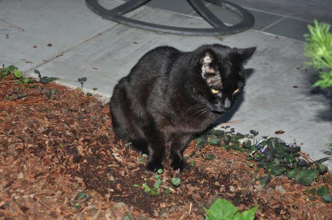 slinky guards the catnip