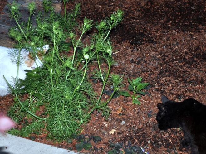 slinky finds some catnip