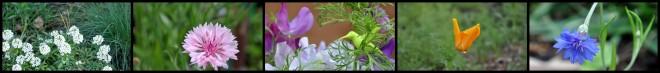 annual plant blog banner