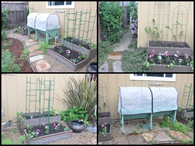 March 10th vegetable garden