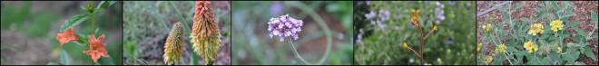 native plants blog banner