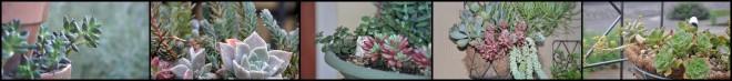 succulents blog banner