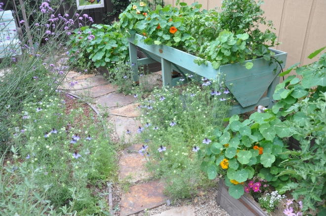 vegetable garden may 5th