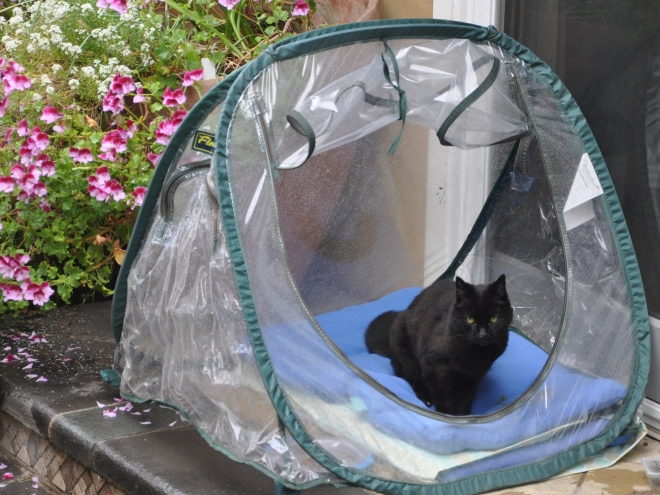 slinky in her greenhouse
