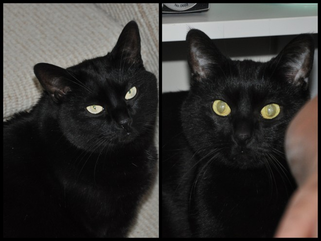pair of black cats