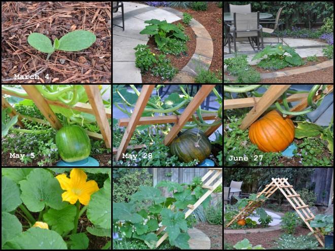 Pumpkin Vines 2016 collage