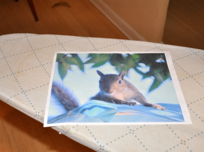 Squirrel photo printed on an inkjet fabric sheet
