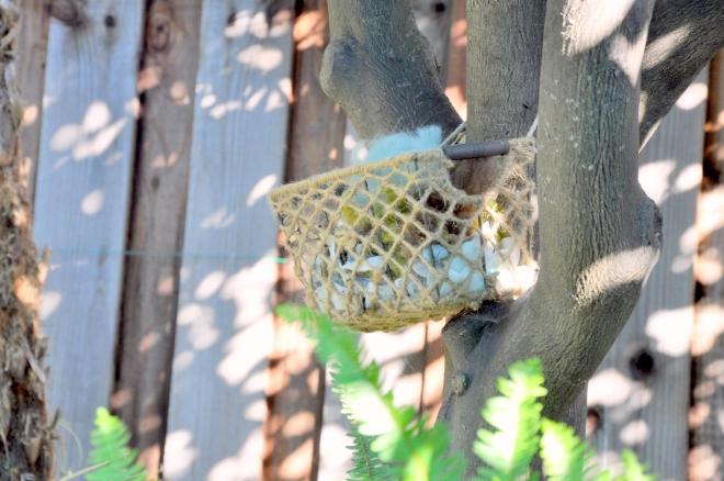 basket of nesting material