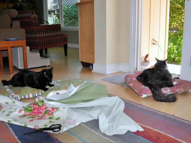 lindy and slinky on the patio cushions