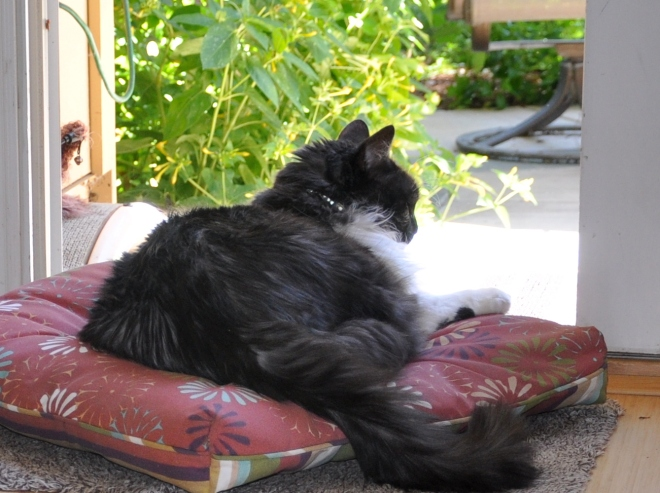 lindy on the patio cushion