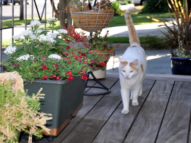 Mouse peruses the clean deck