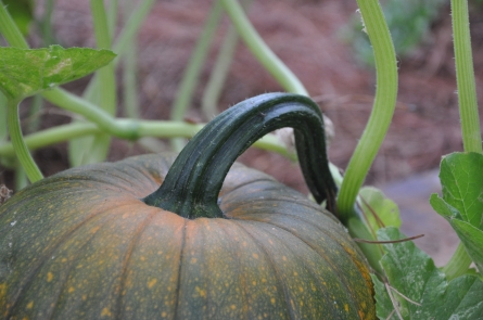 I love this pumpkin's stem