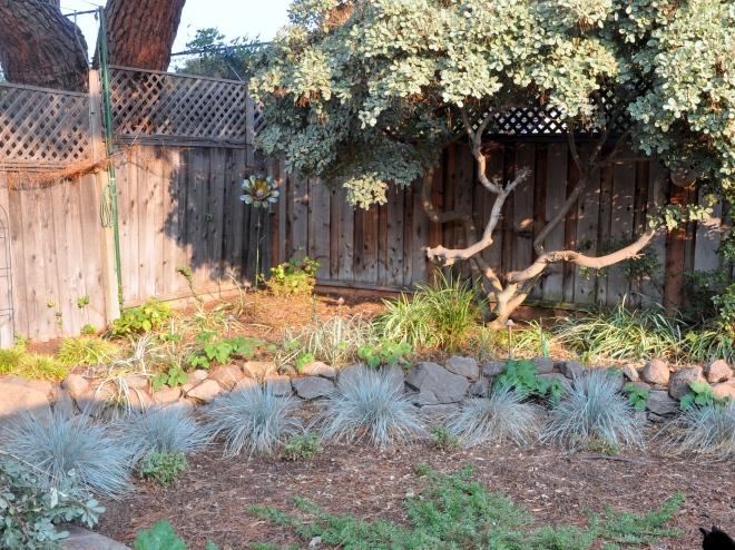 garden corner after pruning