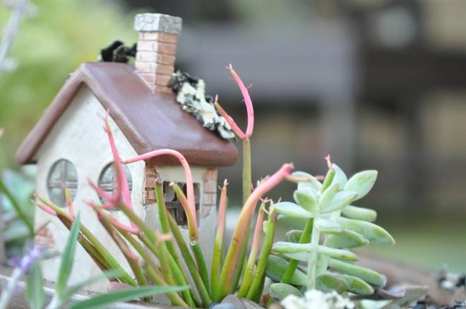 fairy-garden-outback