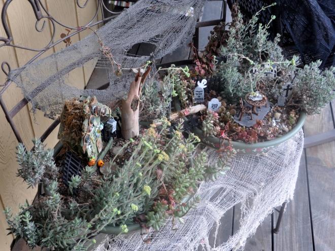 fairy-garden-over-head