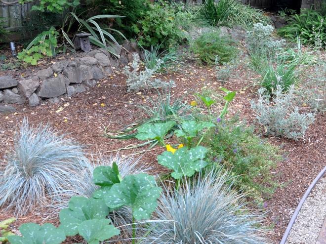 new-growth-on-self-seeded-pumpkin