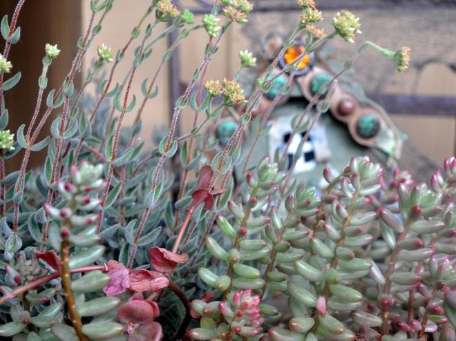 overgrown-fairy-garden