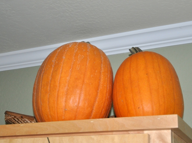 pair-of-pumpkins