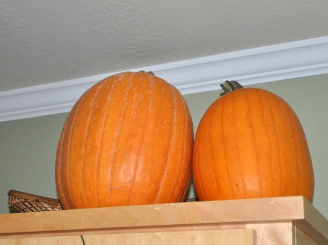 pair-of-pumpkins