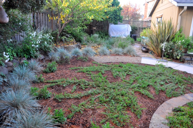 November 2016 * Native garden one year later