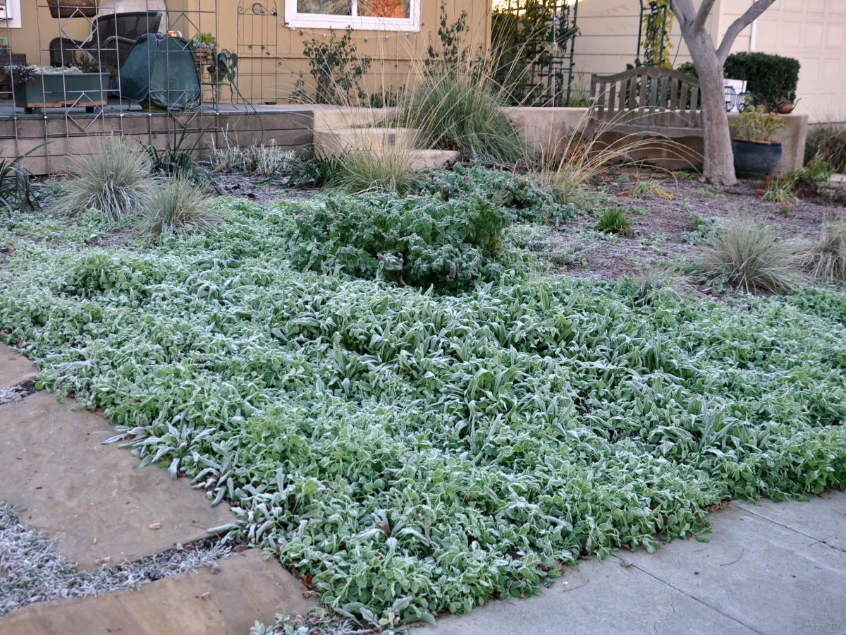 Frosty front garden