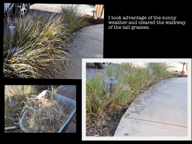 thinning-the-grass-on-the-walkway