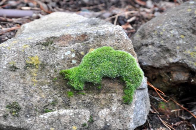 moss-like-cat