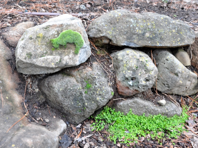 rock-wall-with-moss