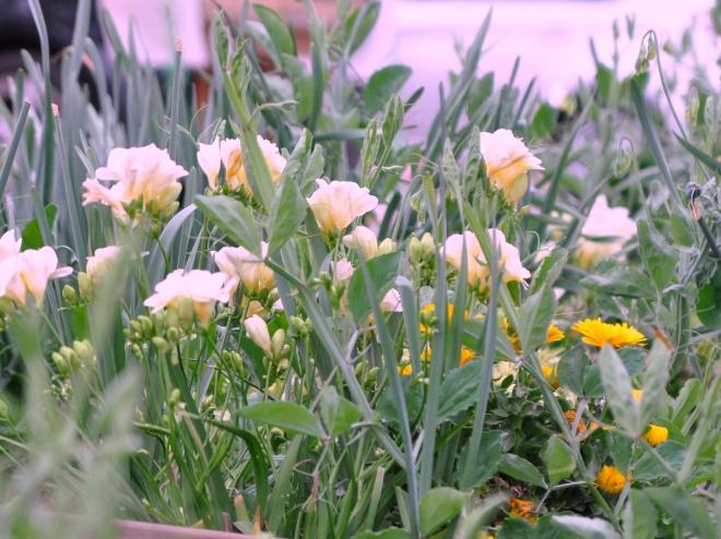 curb garden spring