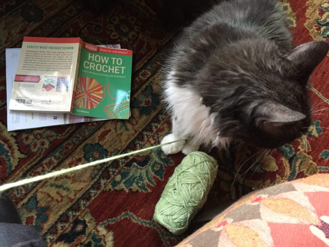 cat with yarn and crochet