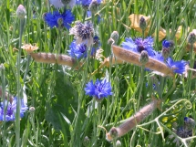 Dried sweet peas blend with the cornflowers