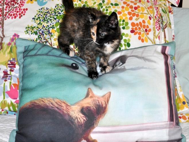 Tessa on Bob the Cat pillow