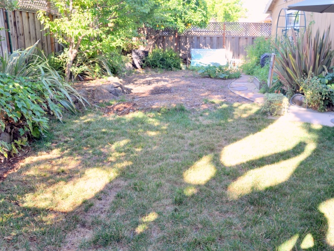 Back Garden: Half of the dried out lawn and half sheet-mulched lawn